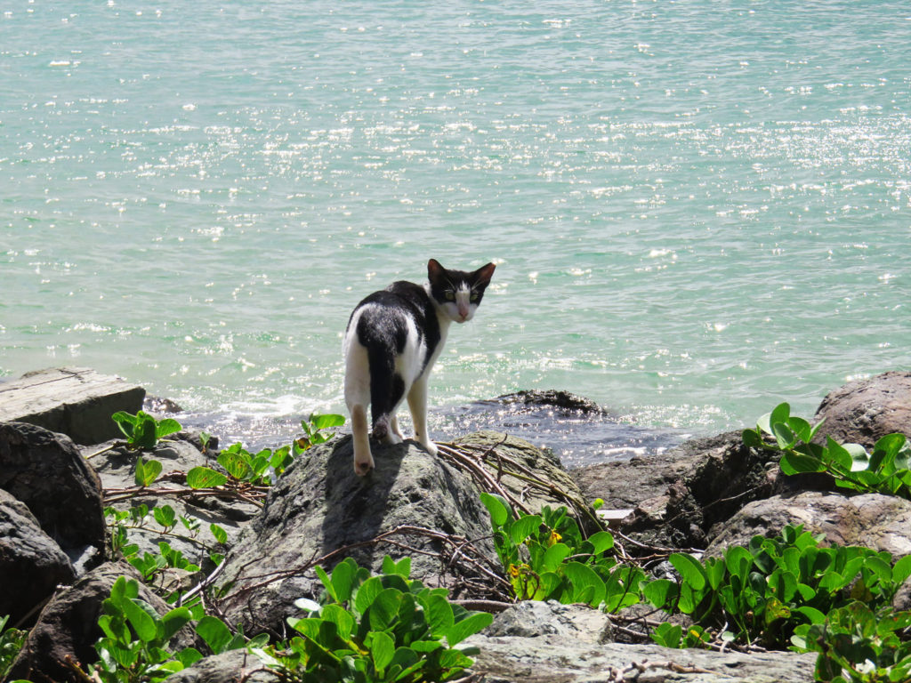 Cat along Paseo del Morro San Juan, Puerto Rico
