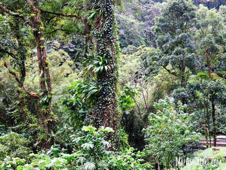 Drive through Martinique rainforest