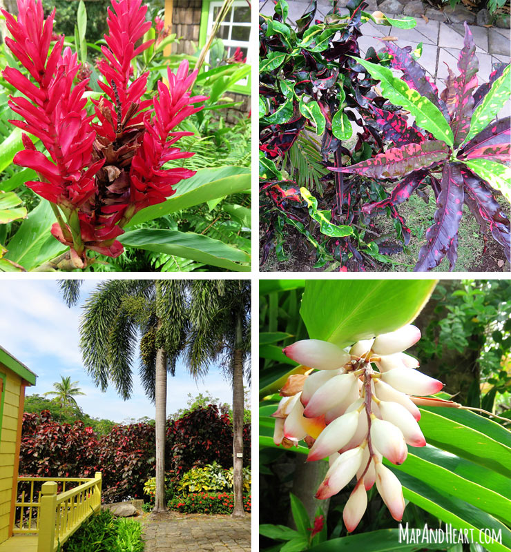Beautiful plants and flowers at Romney Manor